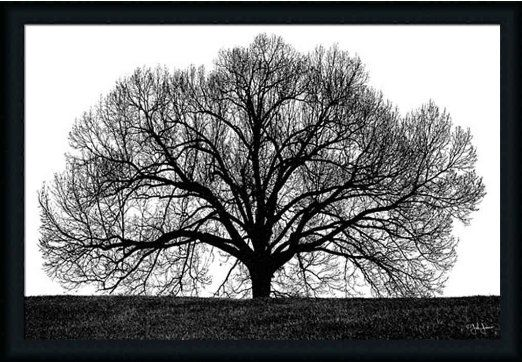 amazoncom the tree by john jones black white photography 39x27 framed art print picture wall decor home kitchen rge decoration ideas