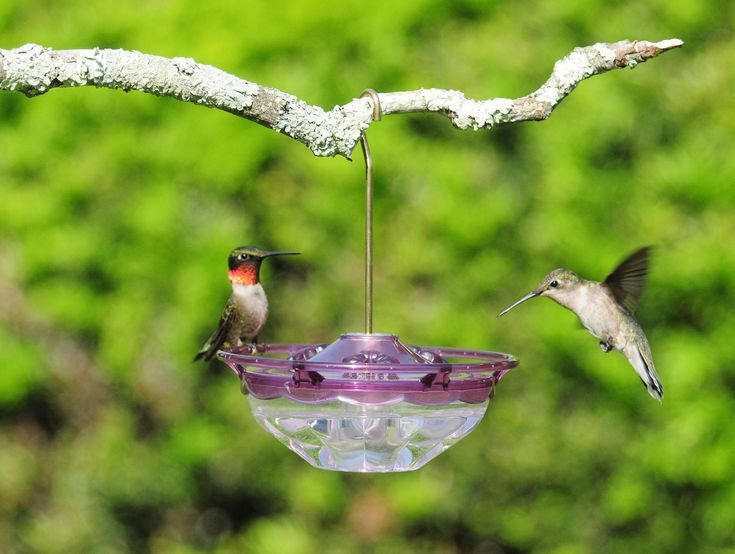 Here is our recipe for homemade hummingbird food we use