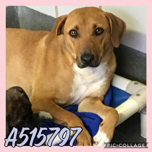 Vera Located In San Antonio Tx Has 1 Day Left To Live Adopt Him