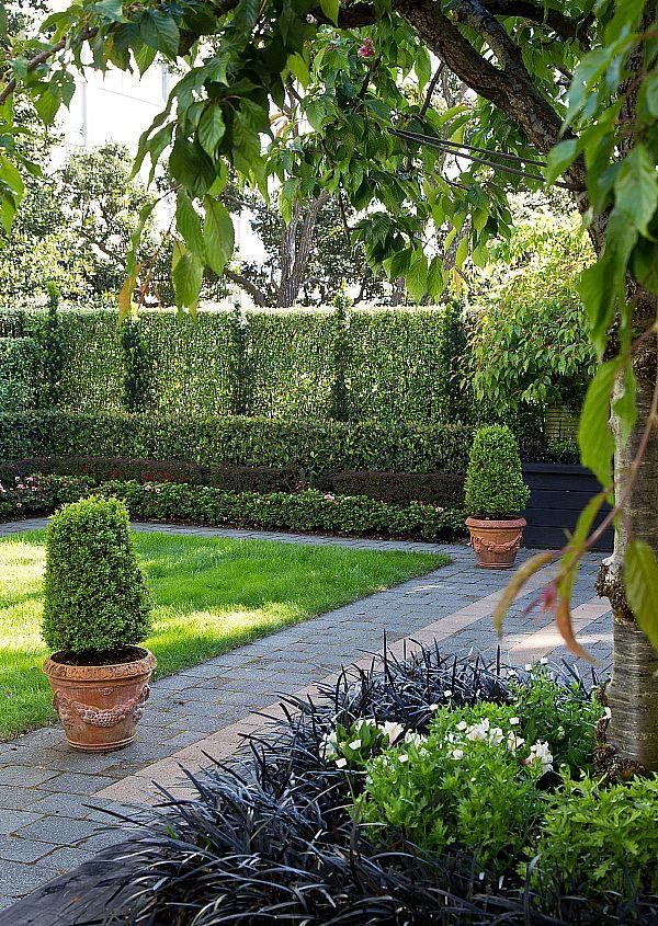 Irish Yews against a backdrop of Corokia hedge | HEDGE Garden Design & Nursery. Photo courtesy of Paul McCredie for NZ House & Garden.