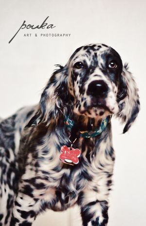"Click visit site and Check out Best ""English Setter"" T-shirts. This website is superb. Tip: You can search ""your name"" or ""your favorite shirts"" at search bar on the top."