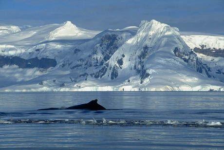 Los sistemas polares almacenan la mayor cantidad de agua dulce del planeta