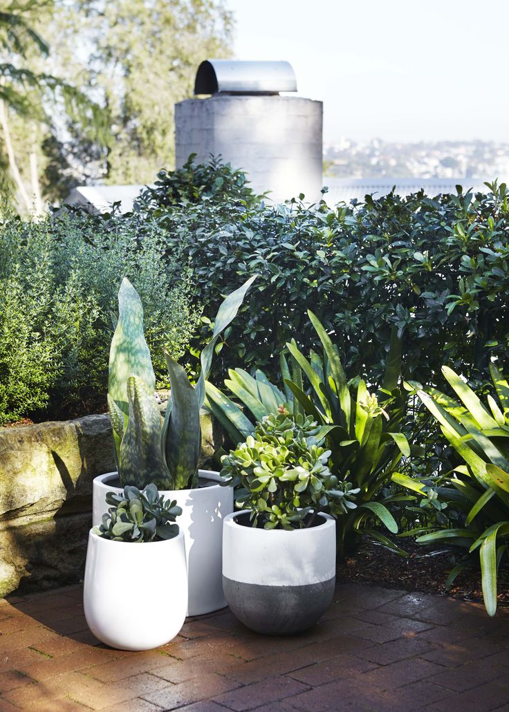 Pots add colour, texture and depth to an outdoor space. Here are four things to consider when choosing pieces for the outdoors