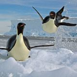 """If you could pop out of the water like that, you would have reached """"escape velocity,"""" too!"""