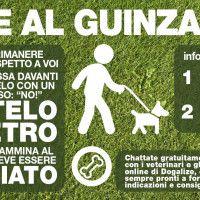 #dogalize Infografica: come portare il cane al guinzaglio #dogs #cats #pets
