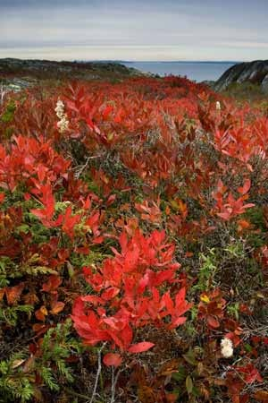 Fall colours near Halifax, Nova Scotia