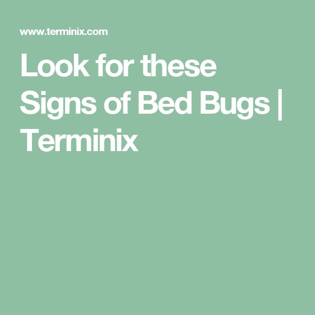 Look for these Signs of Bed Bugs | Terminix