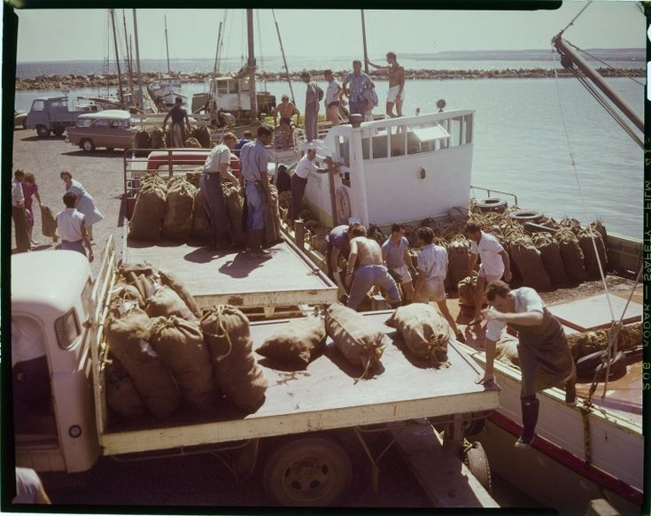 228008PD: Unloading western rock lobsters from the Lady Joyous at Geraldton Harbour, ca. 1962. https://encore.slwa.wa.gov.au/iii/encore/record/C__Rb3756219