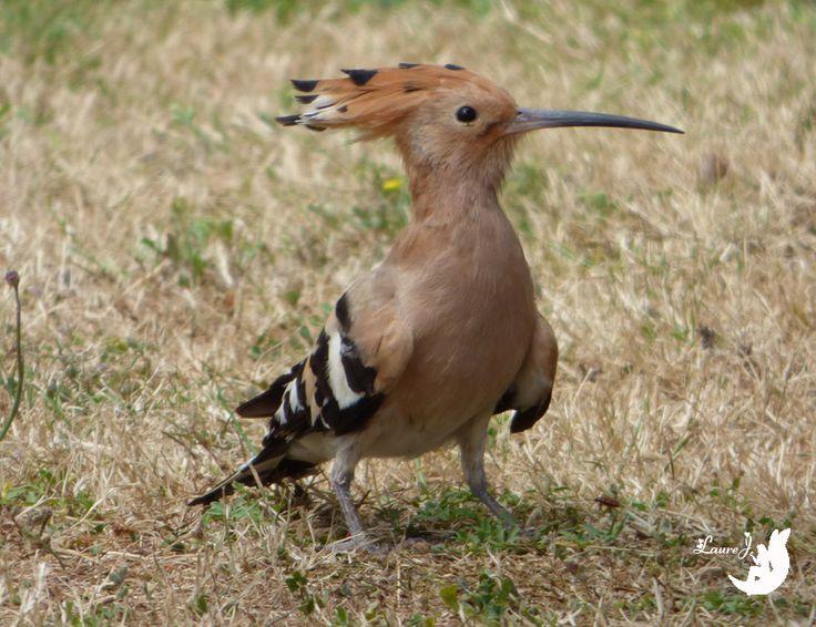 Les 79 meilleures images propos de oiseaux de nos for Oiseaux de nos jardins