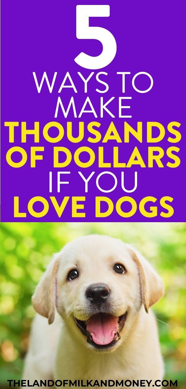 How To Make Money With Dogs (Or Cats) – Earn $3,000+ From Pets! – Ways To Make Money