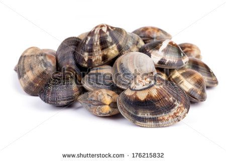 Seafood - Mollusks - Raw clams on white background. - stock photo