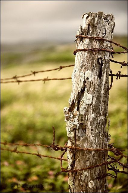 Old barbed wire fences