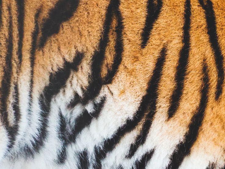 Tiger Helsinki