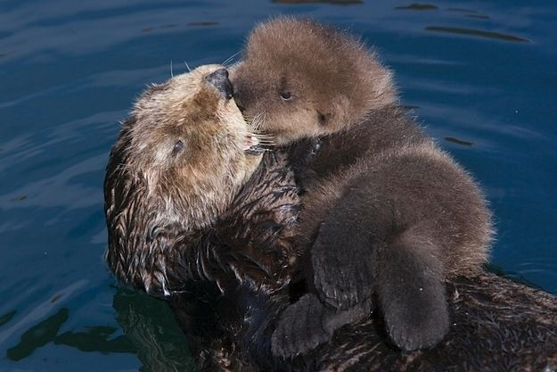 They need cuddles   14 Reasons Why Otters Are Perfect바카라주소♤♠ XM776.COM ♠♤카지노주소바카라주소카지노주소바카라주소카지노주소바카라주소카지노주소바카라주소카지노주소바카라주소카지노주소바카라주소카지노주소바카라주소카지노주소바카라주소카지노주소바카라주소카지노주소바카라주소카지노주소바카라주소카지노주소바카라주소카지노주소바카라주소카지노주소