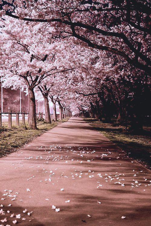 Neuer Beitrag zur Reisestory – #cherryblossom #Post #travelstory – #cherryblossom #post