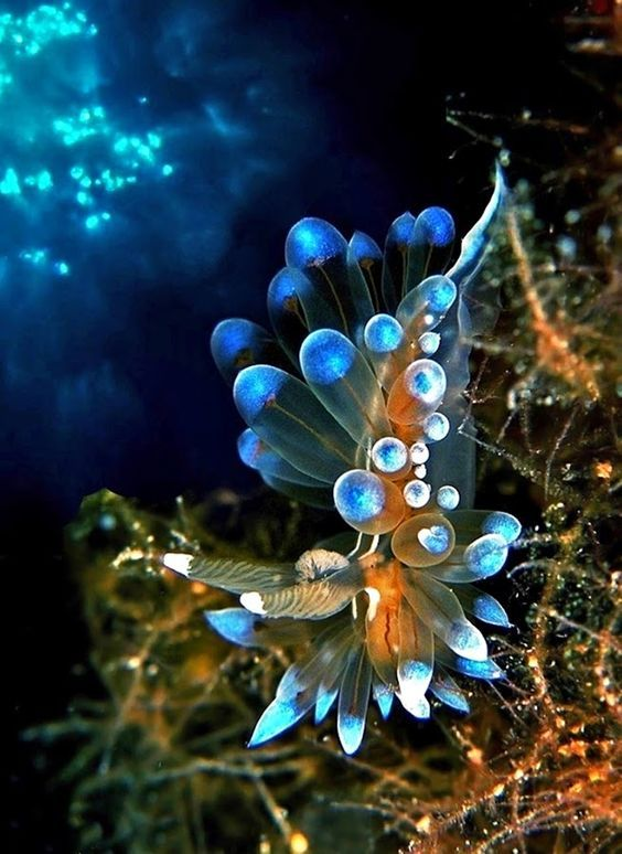 Nudi branches  | Bioluminescence | | nature | #Bioluminescence #nature https://biopop.com/