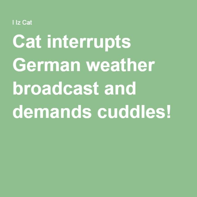 Cat interrupts German weather broadcast and demands cuddles!