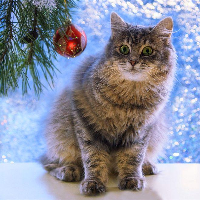 Пазл Новогодний котик — собрать пазл онлайн