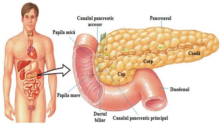 Pancreasul este un organ foarte important al organismului uman, responsabil într-o măsură mai mare sau mai mică atât de digestie cât și de procesele schimbului de substanțe. Este o glandă responsabilă de secreția glucagonului, insulinei și sucului gastric, necesar procesului de digestie. Anume din a