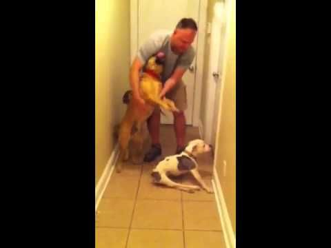 A video uploaded by Melissa Swanson on March 26 is going viral, touching viewers with its heartwarming and heart-strings tugging depiction of a crippled dog dragging herself to the door to greet her returning airman petdad. Emma has to wait her turn while the family's other dogs jump all over Daddy, but she is rewarded with a loving embrace.