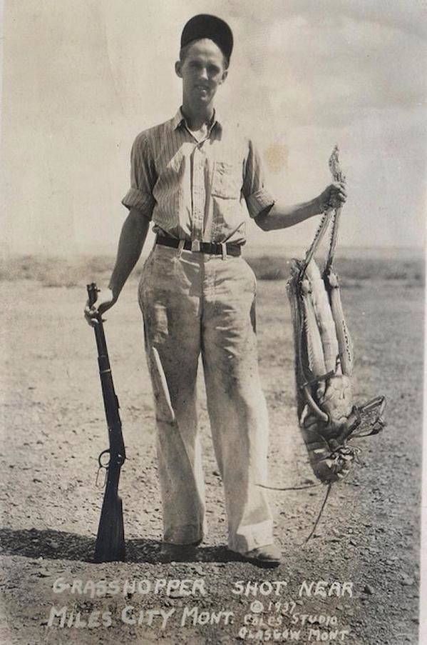1937 - Cazando saltamontes gigantes... // 1937 - Hunting grasshoppers giants...