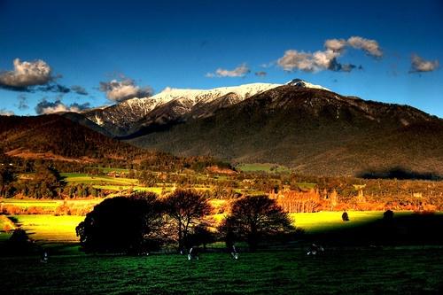 Mt Bogong.