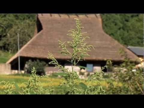 SATOYAMA、FURUSATO  「里山セミナーハウス天空農園」。築250年の茅葺古民家はかつて海外から農業を学びに来る人のための「農文塾」でした。長い間、空き家になっていましたが、2011年古民家再生事業で一棟貸しのセミナーハウスに生まれ変わりました。敷地内には何百年も変わらない農の営み、棚田と茶畑、そして里山があります。