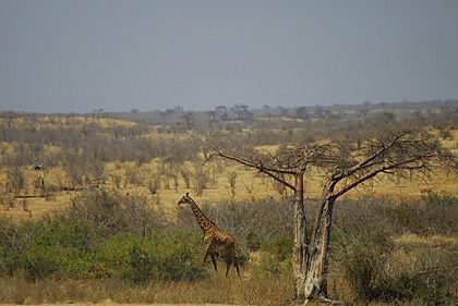 Grasslands usually have temperate to tropical climates.  They tend to receive at least a decent amount of water and there is constant sunlight because of a lack of trees.