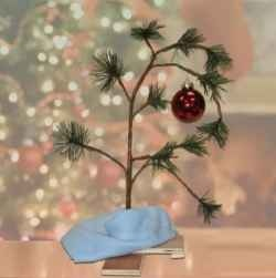Ever since I first saw A Charlie Brown Christmas in the 1970s, I, like thousands around the world, fell in love with Charlie Brown's somewhat pathetic but sincere Christmas tree.