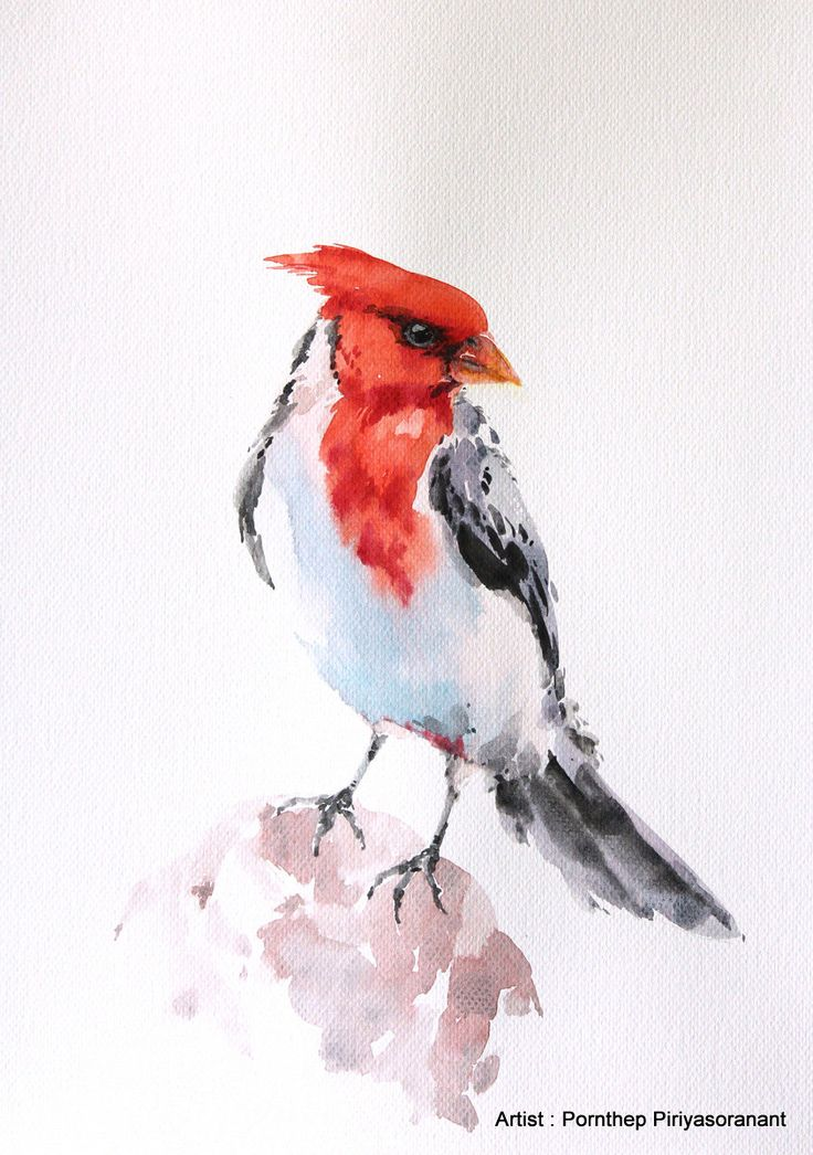 Bird Painting Watercolor, watercolor painting, bird art, watercolor, Art print size 8X10 inch for room décor and special gift  No.4 by OrientalArt2029 on Etsy