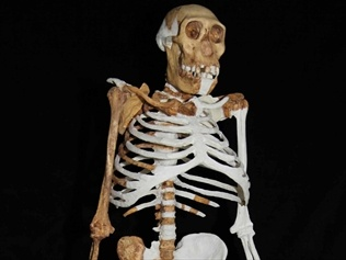Meet Sediba*, a 2 million year-old Australopithecus sediba, who, along with 4 others of her species, has provided  paleontologists with - the first-ever kneecap, the most well-preserved upper limb, and a complete set of foot, leg and hip pieces from an adult female that have allowed her gait to be decoded. *She hasn't been given a name, so I'm calling her Sediba - after all, Lucy (Australopithecus afarensis) got a name!