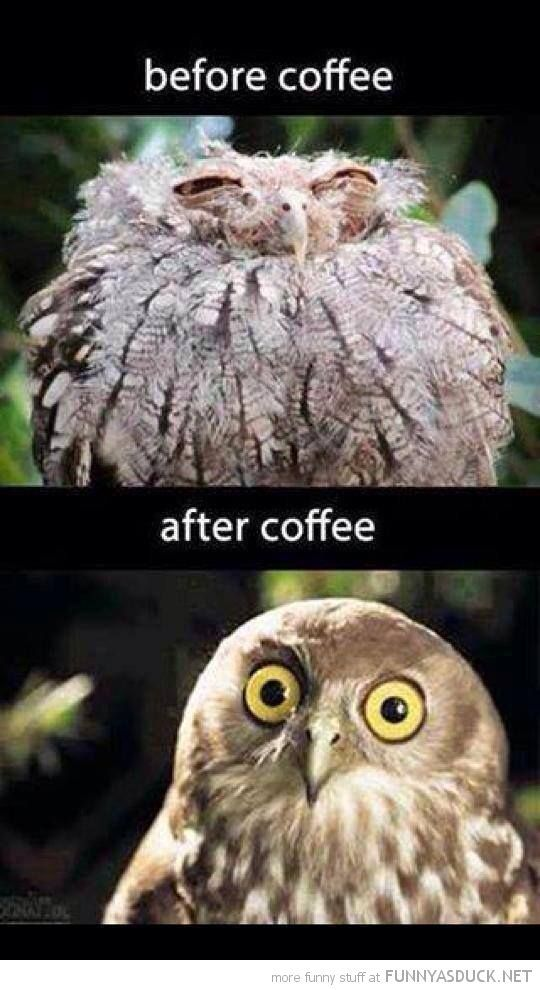 Owl Before And After The Morning Coffee. Maybe I Need To Start Drinking  Coffee!