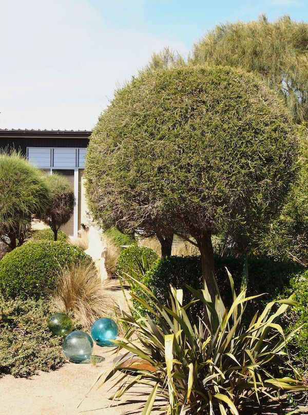 Fiona Brockhoff has become synonymous with environmentally sustainable coastal garden design in southern Australia, and with good reason. Her adventurous use of native plants like clipped casuarina...