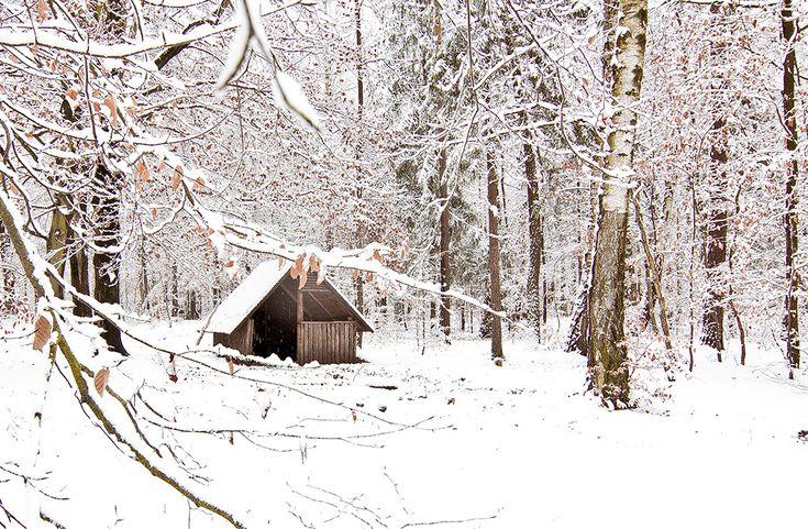 Erster Schnee in Dresden 2014 (Weißer Hirsch)
