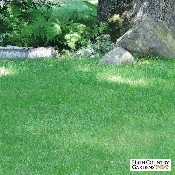 Go 'green' with the 'No Mow Lawn Grass Seed mix. This ecologically sensible lawn will save you time, water, fuel and money while enjoying a deep green, thick carpet of low growing, fine textured turf. This specially blended mix of six different dwarf Fine Fescue grass varieties has been formulated to provide a very deep-rooted (2-3 feet), dense turf that needs little additional irrigation (except during dry spells without summer rains). Left unmowed, the grass blades create a wonderfully…