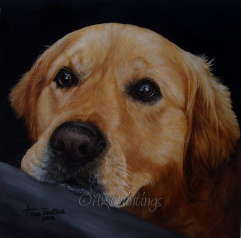 Conor - golden retriever commission, painting by artist Anne Zoutsos