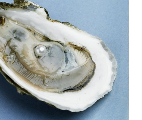 Oysters Often Change Their Gender Oysters Pearls