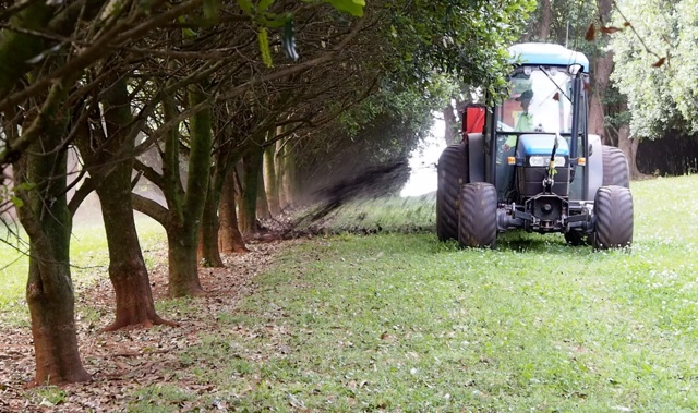 Spreading the compost throughout the root-zone of the trees improves the health or the soil and the health of our trees.  We look after our soils and the trees provide us with the best quality and flavour macadamia nuts.      We use large tyres and small machinery to minimise soil compaction in the orchard.