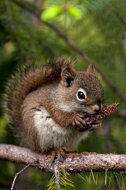 Hungry little squirrel.
