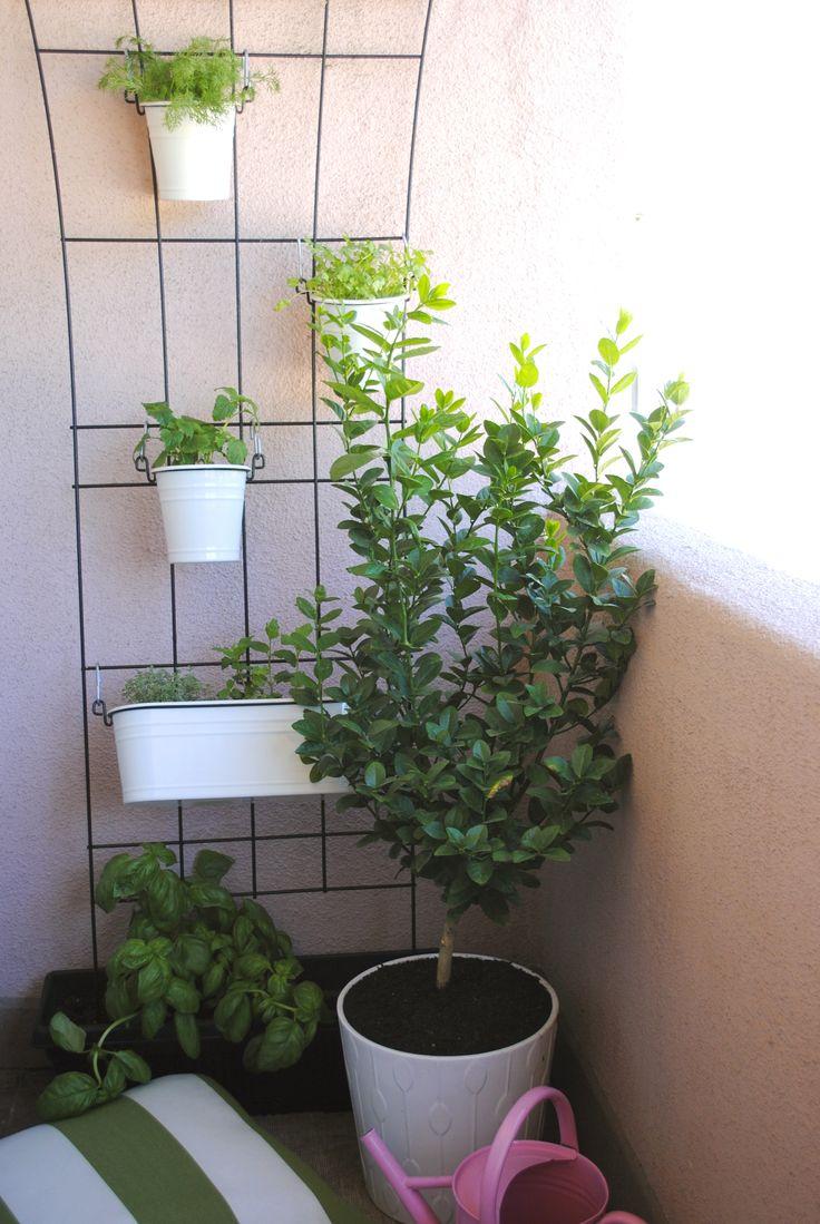 Balcony Herb Garden Balcony Herb Garden - brilliant use of trellis and  rectangular pot in shallow
