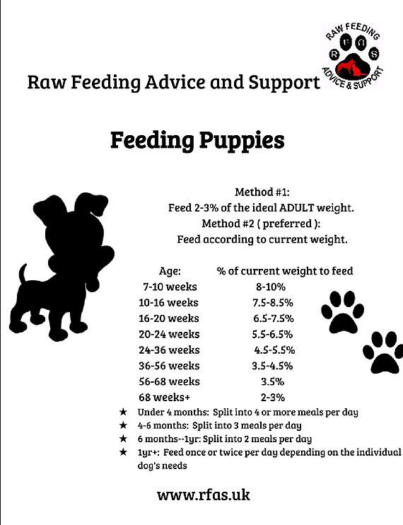 Puppy Starter Guide Raw Feeding Advice And Support Feeding
