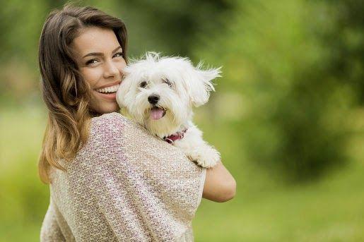 Suche #karmy Applaws dla psów
