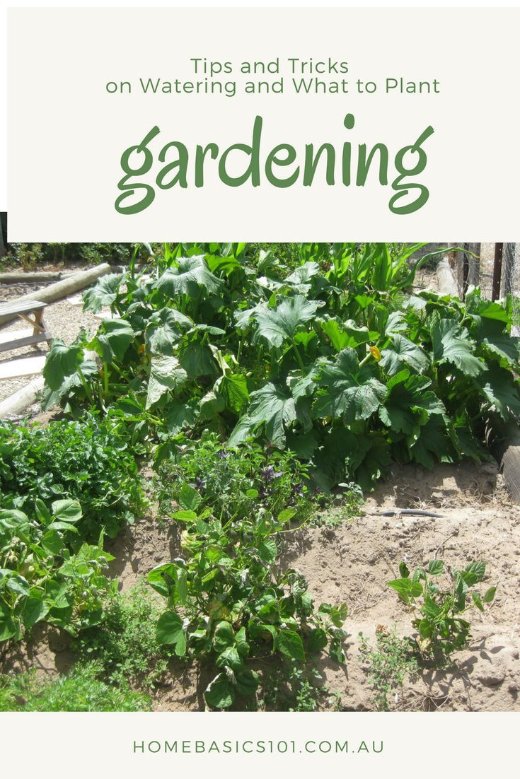 Vegie Patch Watering System    A vegie patch in your own garden is something that a lot of us want, but  finding the time and space seems all to hard. Especially when it comes to  keeping enough water to where its needed (scheduled via http://www.tailwind
