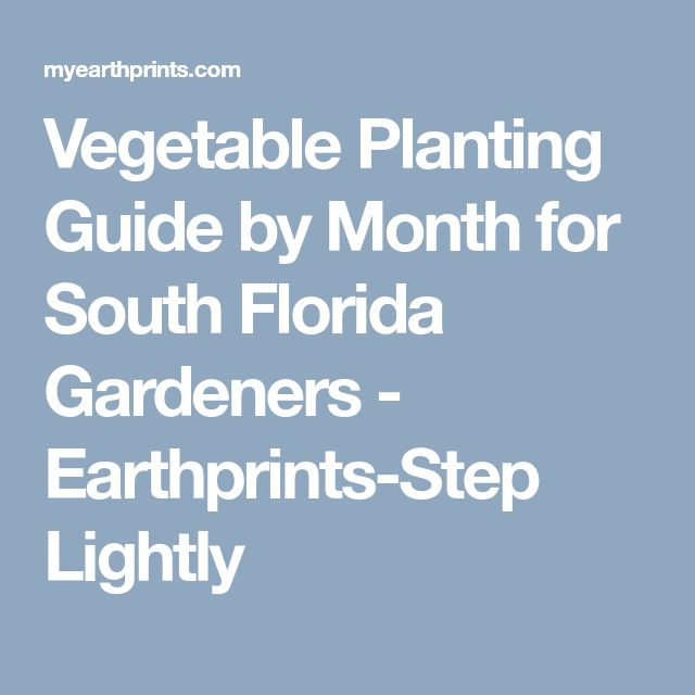 Vegetable Planting Guide by Month for South Florida Gardeners - Earthprints-Step Lightly