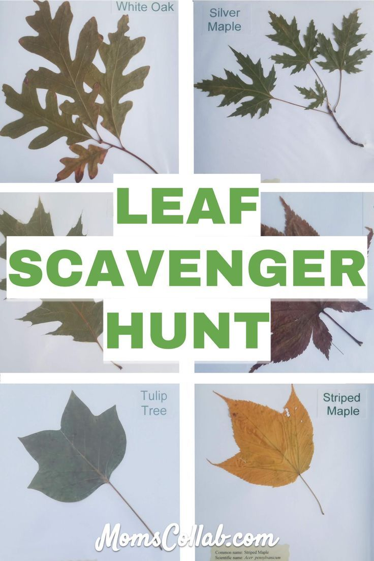76 Types Of Leaves With Names And Pictures In 2020 Autumn Activities For Kids Fun Fall Activities Leaf Identification