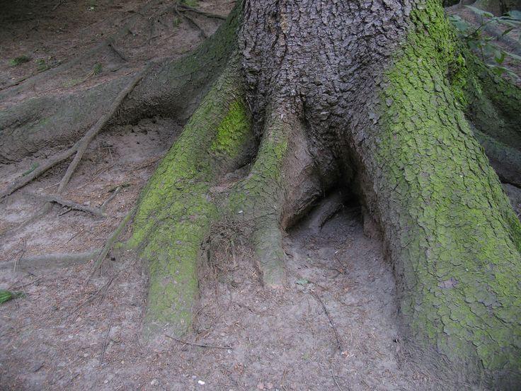 У деревьев есть корни, а у многих симптомов - причины. В том числе, и у переедания. Поэтому, чтобы прекратить переедать, частенько требуется пойти «вглубь» и решить вопросы, которые выходят за рамки только пищевого поведения.