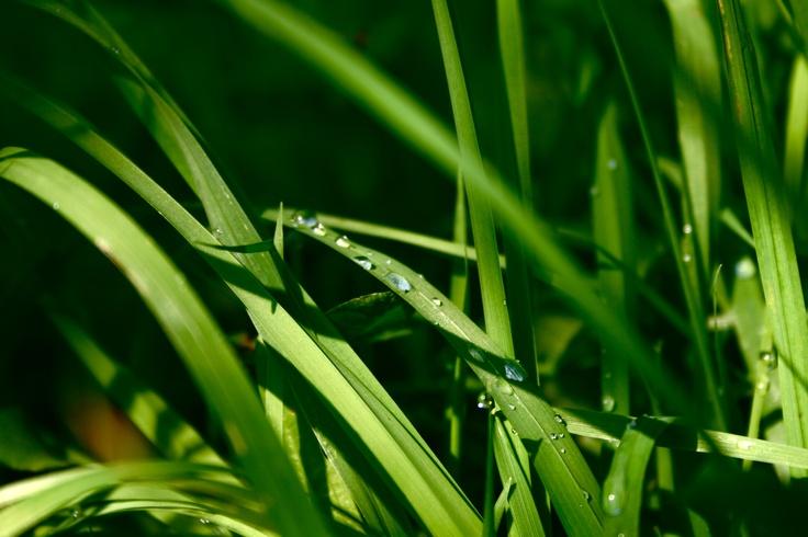 Water pearls: Water Pearls, Natural Beautiful