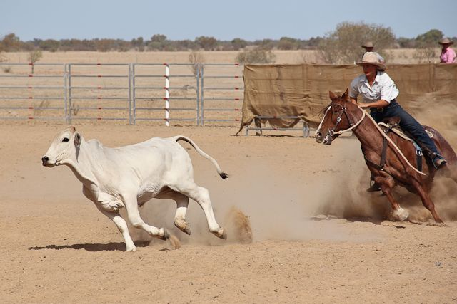 Blog Post about the campdraft and rodeo in Birdsville
