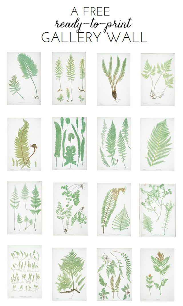 Ready-To-Print Gallery Wall: Fern Botanicals - Emily A. Clark
