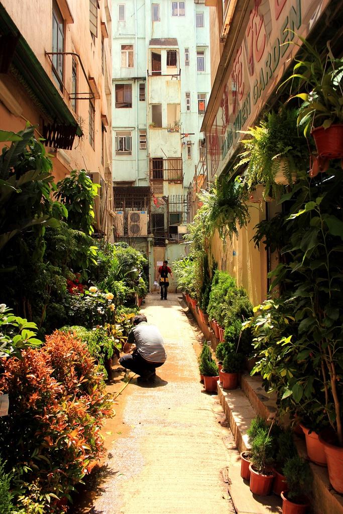Kowloon Flower Markets Hong Kong 102 best